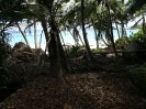 Verfallenes Farmerhaus an der Anse Capucins
